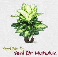 Erzurum �i�ek