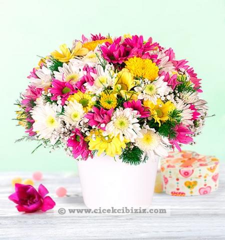 Erzurum Çiçek renklı papatyalar